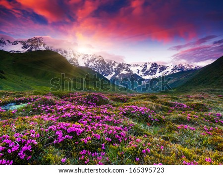 Fantastic colorful sunset and bloom rhododendron at the foot of Mt. Shkhara. Dramatic overcast sky. Upper Svaneti, Georgia, Europe. Caucasus mountains. Beauty world. - stock photo