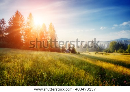 Fantastic day with fresh blooming hills in warm sunlight. Dramatic and picturesque morning scene. Location place: Carpathian, Ukraine, Europe. Artistic picture. Beauty world. Soft filter effect. - stock photo