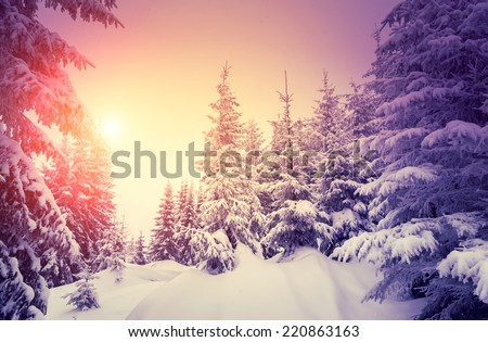 Fantastic landscape glowing by sunlight. Dramatic wintry scene. Natural park. Carpathian, Ukraine, Europe. Beauty world. Retro style filter. Instagram toning effect. Vivid violet. Happy New Year! - stock photo