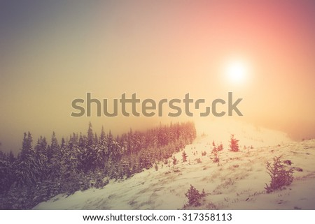 Fantastic landscape of mountains glowing by sunlight. Winter with pine forest. New Year`s landscape. Fresh snow on the trees. Retro filter and Instagram toning effect. - stock photo