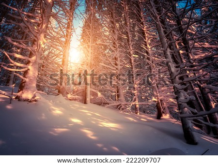 Fantastic snow covered spruce trees glow by sunlight. Dramatic wintry scene. National Park Carpathian, Ukraine, Europe. Beauty world. Retro style filter. Instagram toning effect. Happy New Year! - stock photo