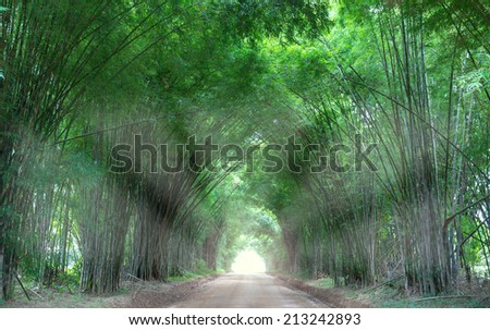 Fantastic Trees Tunnel - stock photo