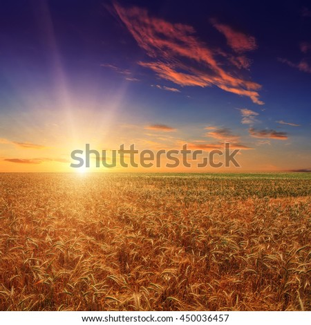 Fantastic wheat field at the sunset. Colorful overcast sky. The idea of a rich harvest concept. Rural landscape under shining sunlight. Soft lighting effects. for the design. creative images - stock photo