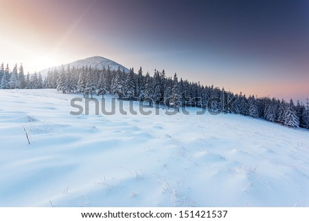 Fantastic winter landscape. Blue sky. Carpathian, Ukraine, Europe. Beauty world.  - stock photo