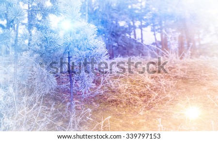 Fantastic winter landscape. Snow and holiday Christmas tree. South Ural, Russia, Europe. - stock photo