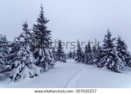 Fantastic winter landscape with dramatic sky and snowy trees. Carpathians, Ukraine, Europe. - stock photo