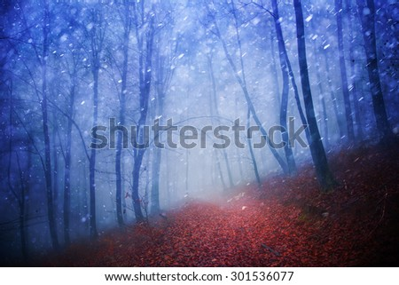 Fantasy blue light seasonal snowy and rainy foggy forest scene with red leaves on floor. - stock photo