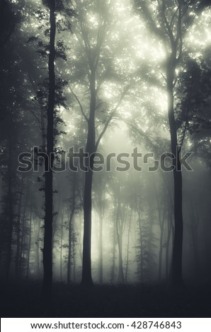 fantasy forest background - stock photo