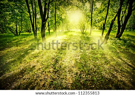 Fantasy green deep forest on summer morning - stock photo