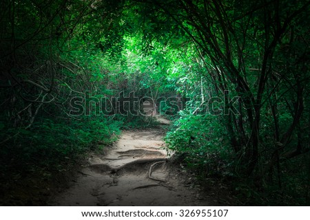 Fantasy landscape of tropical jungle forest with tunnel and path way through lush - stock photo