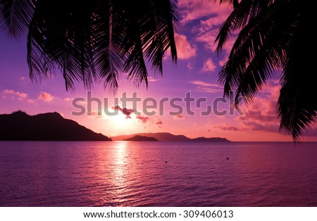 Fantasy Morning Tree  - stock photo