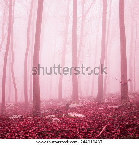 Fantasy purple red color beech forest. Color filter effect used. - stock photo