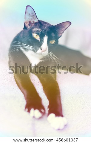 Fantasy Retro vintage stone process.Cute cat with selective and soft focus in bed. - stock photo