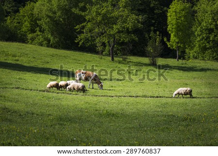 Farm animals in the green field - stock photo