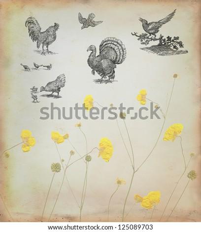 Farm birds set - stock photo