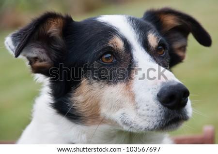 Farm dog - stock photo