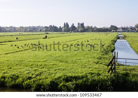 Farm field in Holland - stock photo