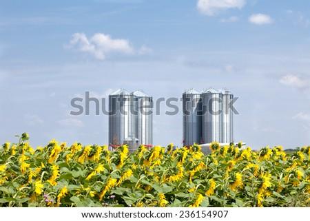 Farm grain silos for agriculture - stock photo