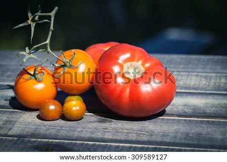 Farm grown tomatos on wooden background. Natural food photography with shallow depth of field. - stock photo