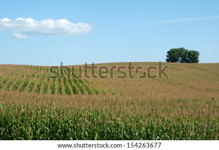 Farm landscape: corn field, maize, with tree in background on the horizon - stock photo