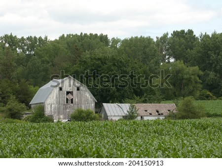 Farm landscape: Old barn and shed with corn field in foreground and trees in background - stock photo