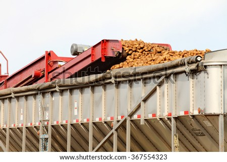 Farm machinery harvesting potatoes in Idaho. - stock photo