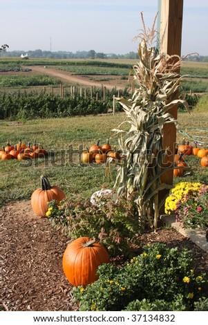 farm market with corn stalks and fields - stock photo