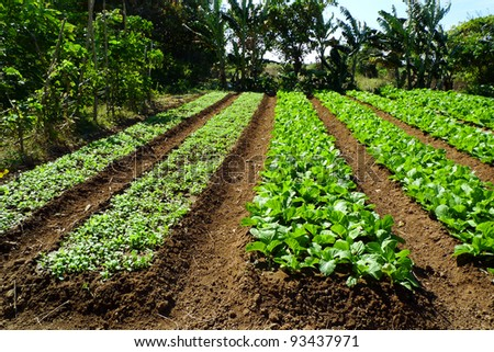 Farm of organic vegetables - stock photo
