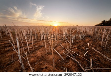 Farm that has been harvested in the Australian outback - stock photo