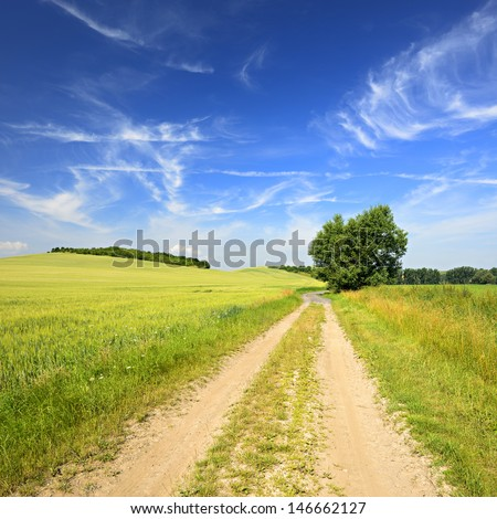 Farm Track trough Green Fields of Barley in Spring Landscape under Blue Sky with Cirrus Clouds - stock photo
