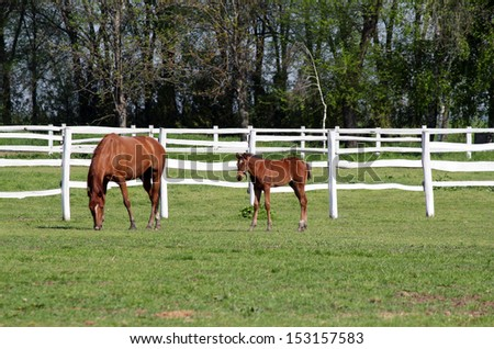 farm with brown horse and foal in corral - stock photo