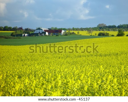 farm with rapeseed field - stock photo