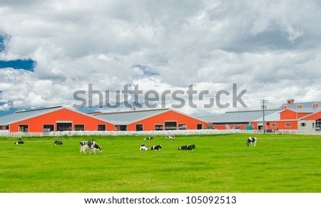 Farm with red barns and cows pasturing on the farm land - stock photo