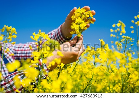 Farmer checking the quality of rapeseed - stock photo