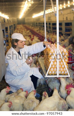 Farmer collecting eggs in chicken farm - stock photo