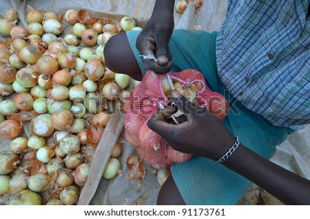 Farmer collects onions - stock photo