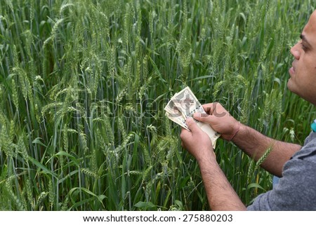 Farmer Counting Indian 500 Rupee currency money in his lush green wheat farm, planning to spend money on agriculture - stock photo