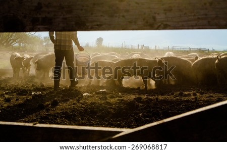 Farmer Feeding Livestock - stock photo