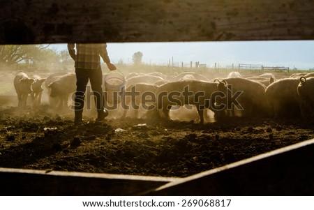 Farmer Feeding Livestock - stock photo