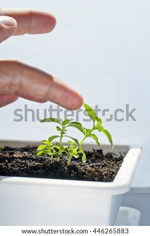 Farmer growing plant, nature man and ecology - stock photo