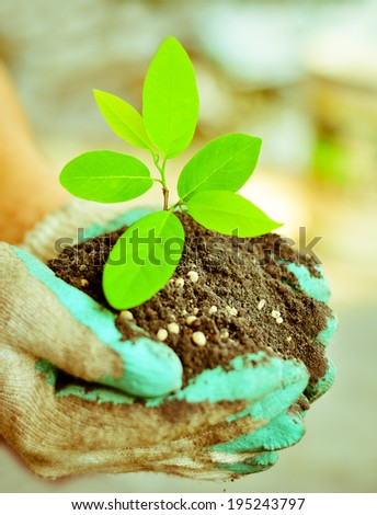 Farmer hand holding tree growing with fertilizer and black soil  - stock photo