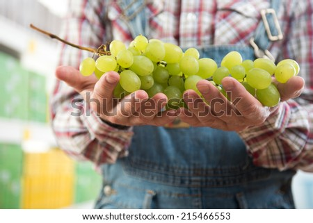 Farmer holding white tasty grape with supermarket shelf on background. - stock photo