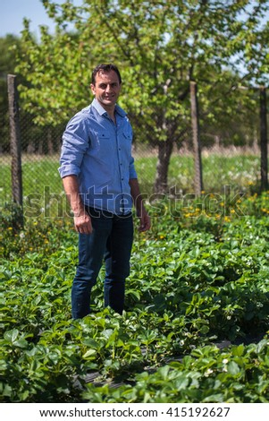Farmer in his field of home grown strawberries in a sunny day - stock photo