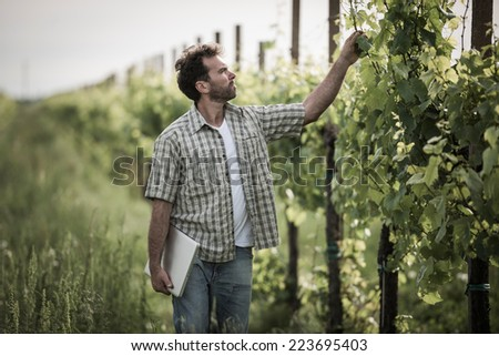 Farmer in vineyard using laptop - stock photo