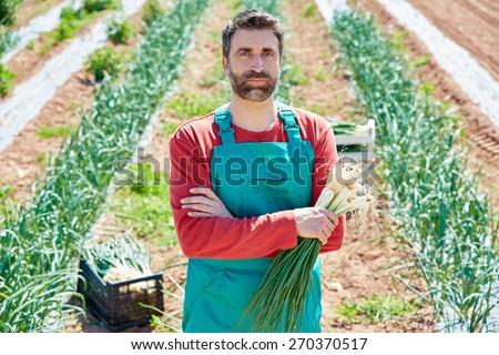 Farmer man harvesting onions in Mediterranean orchard field - stock photo