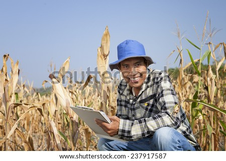 Farmer man holding corn cobs in hands in front of corn plant  - stock photo
