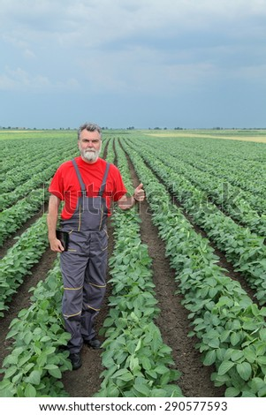 Farmer or agronomist examine soybean plant field and gesturing - stock photo