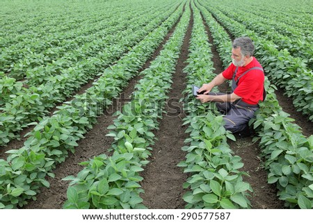 Farmer or agronomist examine soybean plant in field using tablet - stock photo
