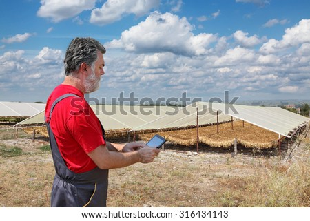 Farmer or agronomist examine tobacco drying in tent using tablet - stock photo
