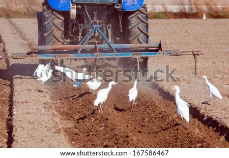 Farmer plowing field with circling white heron - stock photo